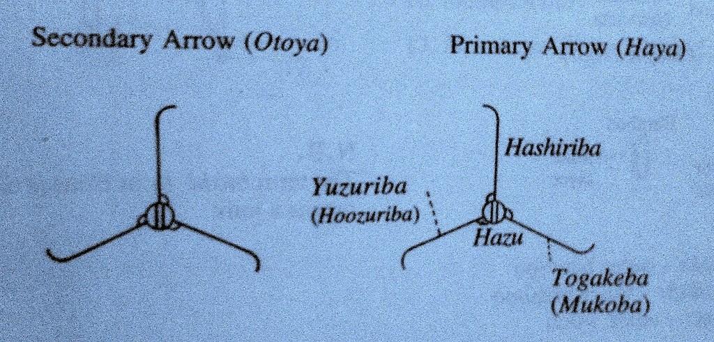 nomenclatura-haya-otoya